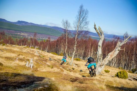 Sweeping singletrack descent on our mountain bike tour Cairngorms