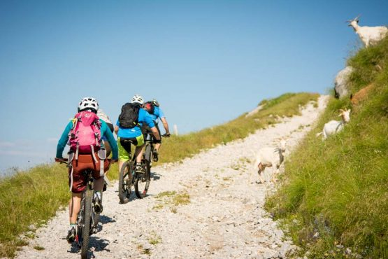 Mountain biking amongst goats on our mountain bike tour Slovenia
