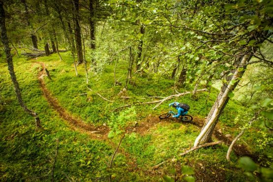 Swooping through perfect forest singletrack on our Fjords of Norway mountain bike tour