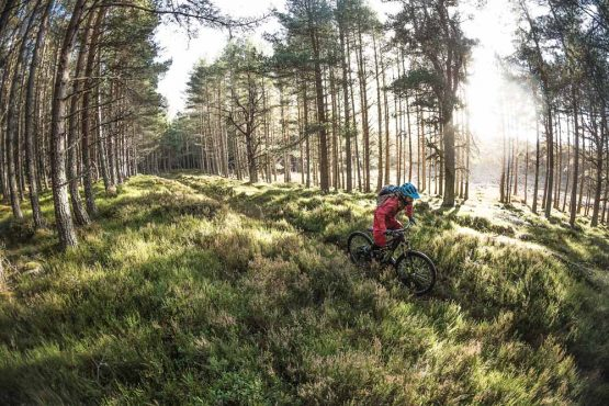 A single rider moving through the forest and shadows on great Cairngorms singletrack on our mountain bike tour Cairngorms