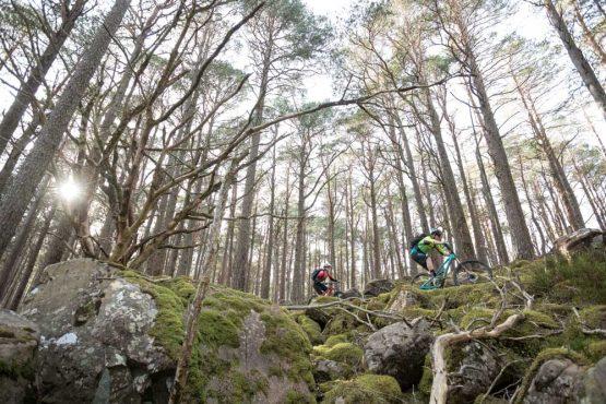 Riders in the forest, coast-to-coast Scotland mountain bike tour