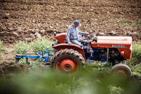 Farmer ploughing in Istria, mountain bike tour Croatia