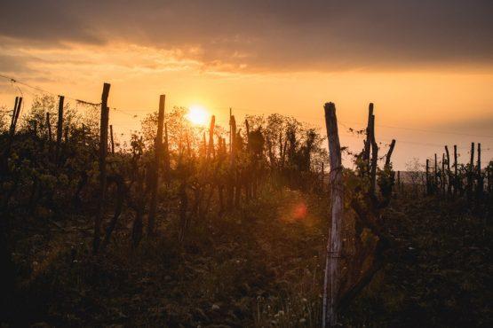 Sunset over the vineyards, mountain bike tour Croatia