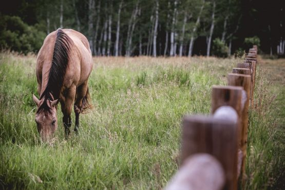 Horse munching on rich pastures outside of Snowmass village during our mountain bike tour Colorado.