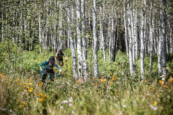 Mountain bikers in the flower meadows and Aspen groves above Snowmass village, part of our mountain bike tour Colorado.