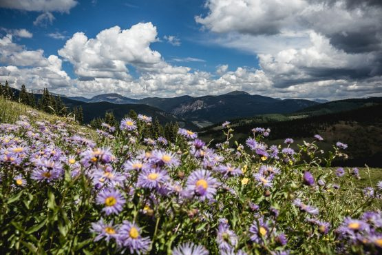 Passing through blooming alpine flowers in Colorado.