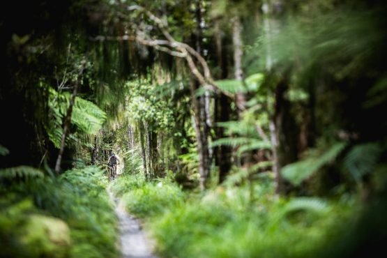 Mountain bike tour New Zealand - Riding through the lush green of the Old Ghost Road.