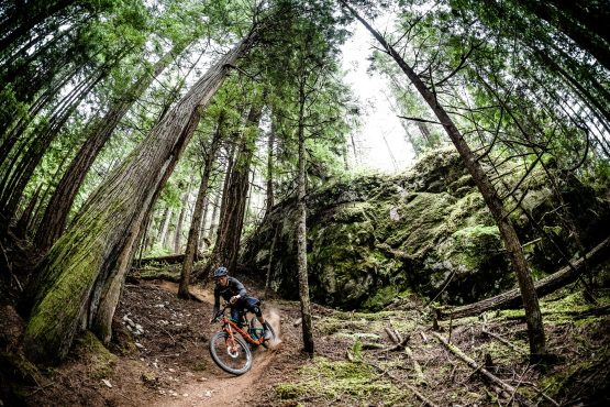 The Mtb was invented for riding dry loam trails in the forest, BC, Canada delivers!