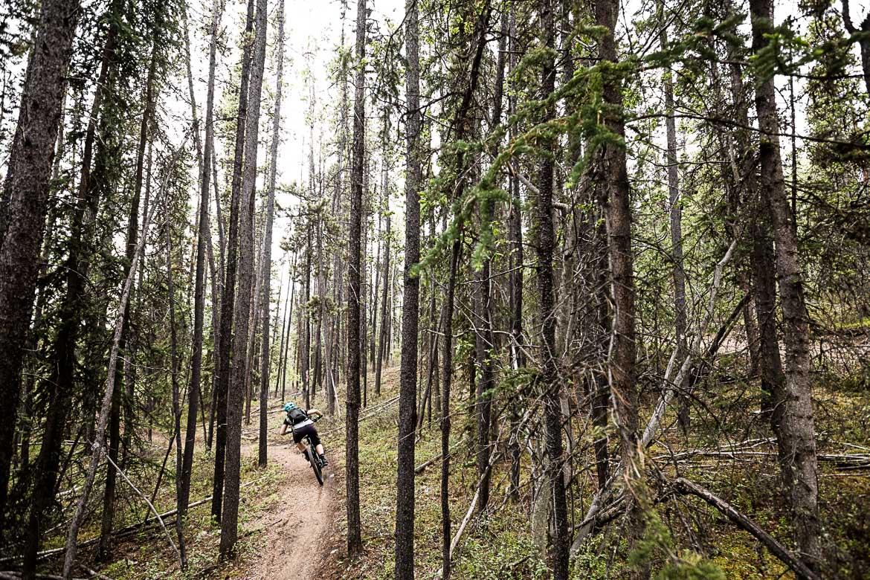 Singletrack MTB riding through the dense forest of the Yukon, Canada