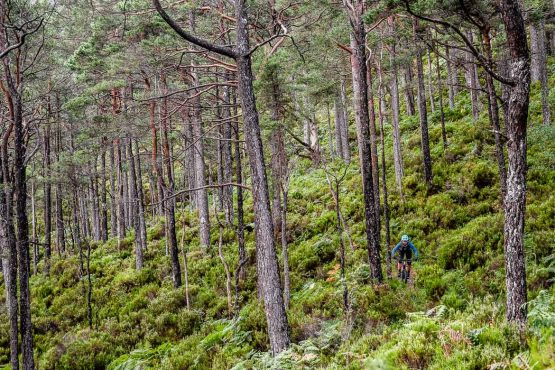 Picking though forest singletrack on The H+I Coast-to-coast guided MTB adventure