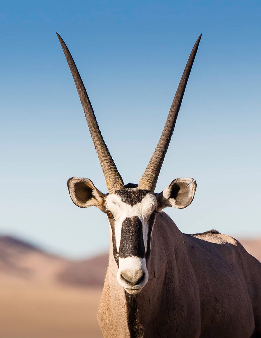 Oryx in Namibia, mountain bike adventures Africa