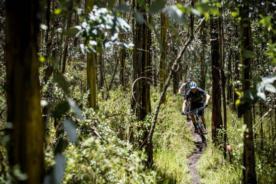Dense forest singletrack on our MTB tour Ecuador