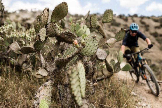 Cactus lined trails on our mountain bike tour Ecuador