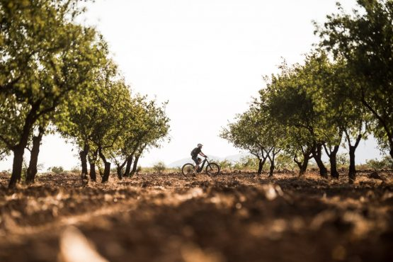E-MTB tour of Spain Olive groves