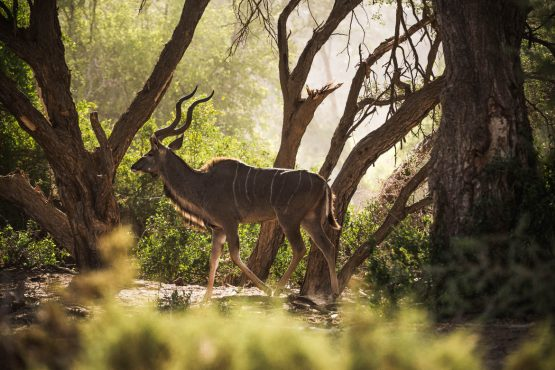 Spotting kudu on a mountain bike safari tour Namibia