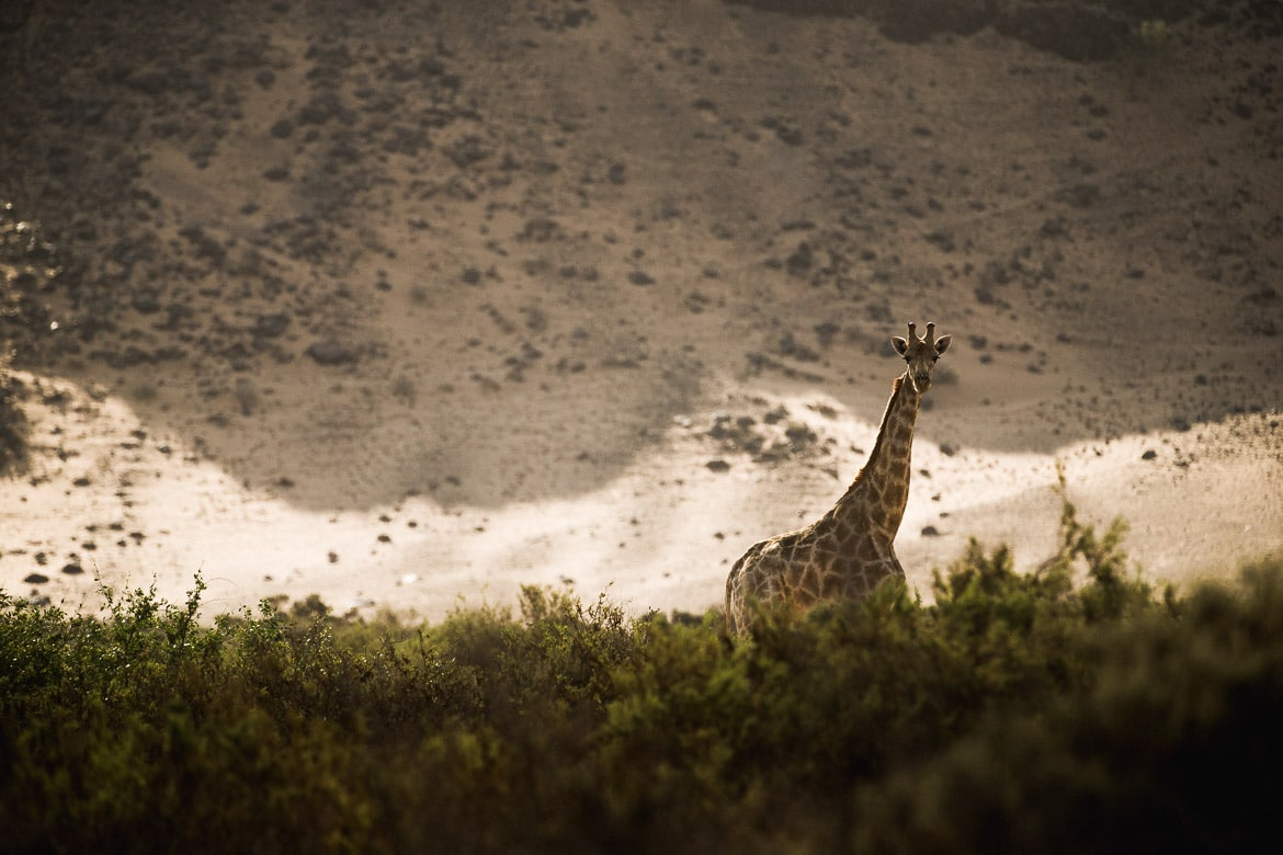 Spotting giraffes on a E-MTB safari of Namibia