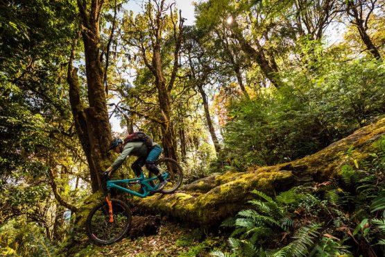 Mountain bike tour Bhutan forest step-down