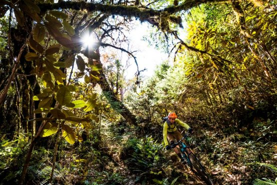 Mountain bike tour Bhutan lush forests