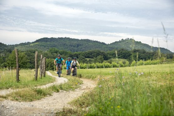Riding between vineyards, MTB + Wine Tour Slovenia
