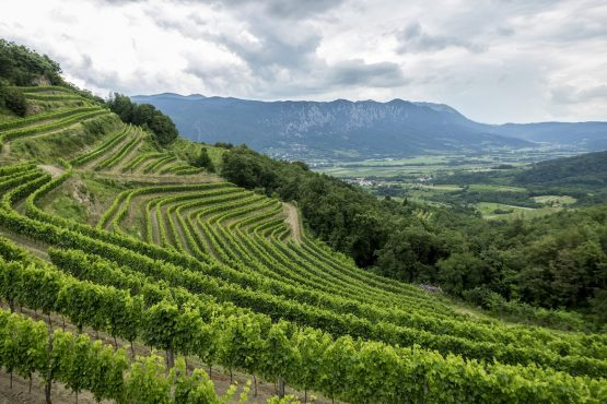 Visit the vineyards on our MTB + Wine Tour Slovenia