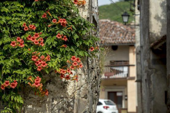 Ride through medieval villages, MTB + Wine Tour Slovenia