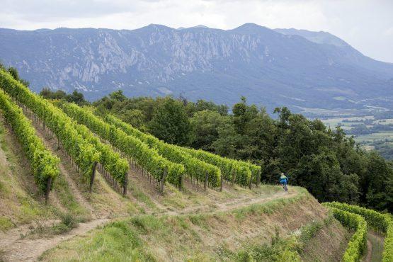 Buff singletrack in Vipava Valley, MTB + Wine Tour Slovenia